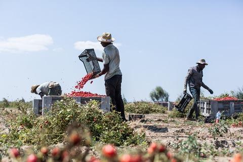 SUR_Migrant farmers Italy_1