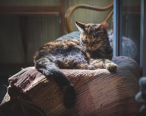 cat-3523991_640