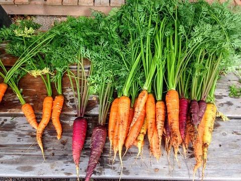 carrot-2743498_1280