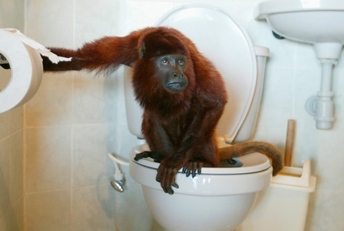Columbia julian a pet red howler monkey uses the toilet in la pintada rtr1mbuf