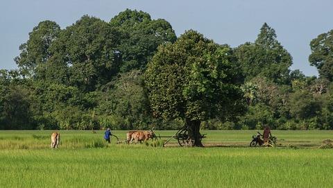cambodia-1527454_640