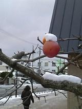 20051210DC雪とリンゴ