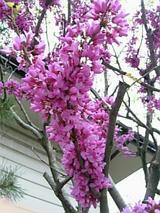 20060512紫色の花