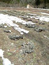 20060321ラベンダー畑