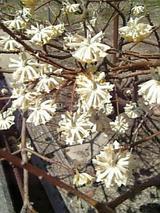 20060423きれいな花