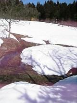 20060307ラベンダー畑3