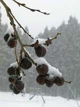 20010122豆柿