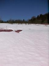 20060307ラベンダー畑1