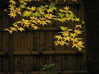 紅葉@京都4-32.jpg