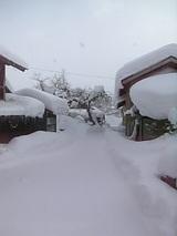 20060104雪の朝2