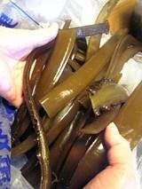 20060403ワカメの茎