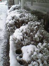 20051210DC雪とラベンダー