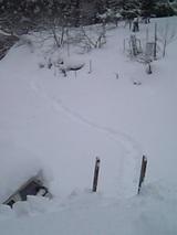 20051225雪降ろし3