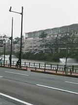 20050427千秋公園の桜