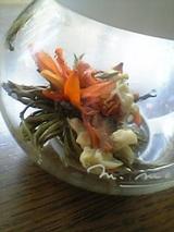 20050909工芸茶06