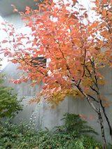 20051104紅葉