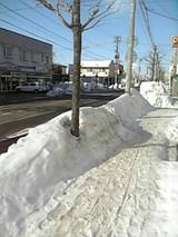 20060129晴れ渡る歩道