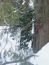 20060120保存樹