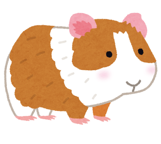 animal_marmot