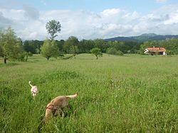Campo_sfondo_valle