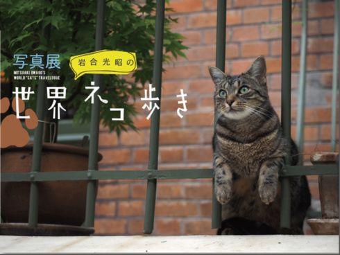 kuro_150313neko01