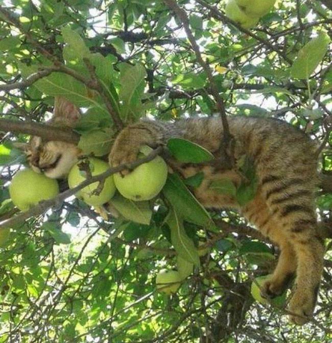 sleeping-cats-in-trees-55-5f153aaa3d60f__700