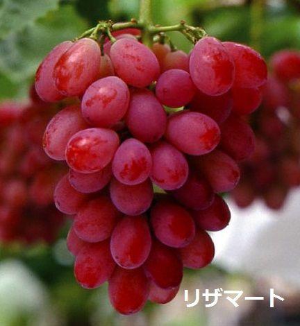 kokkaen_20139-p8-240[1]