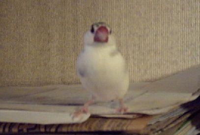 suzu2004-05-24-2