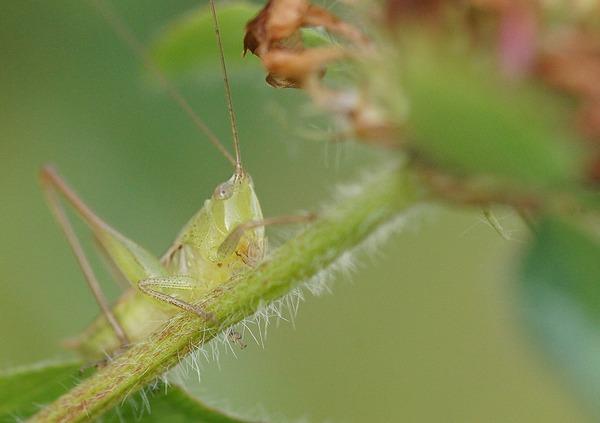 虫 (11)