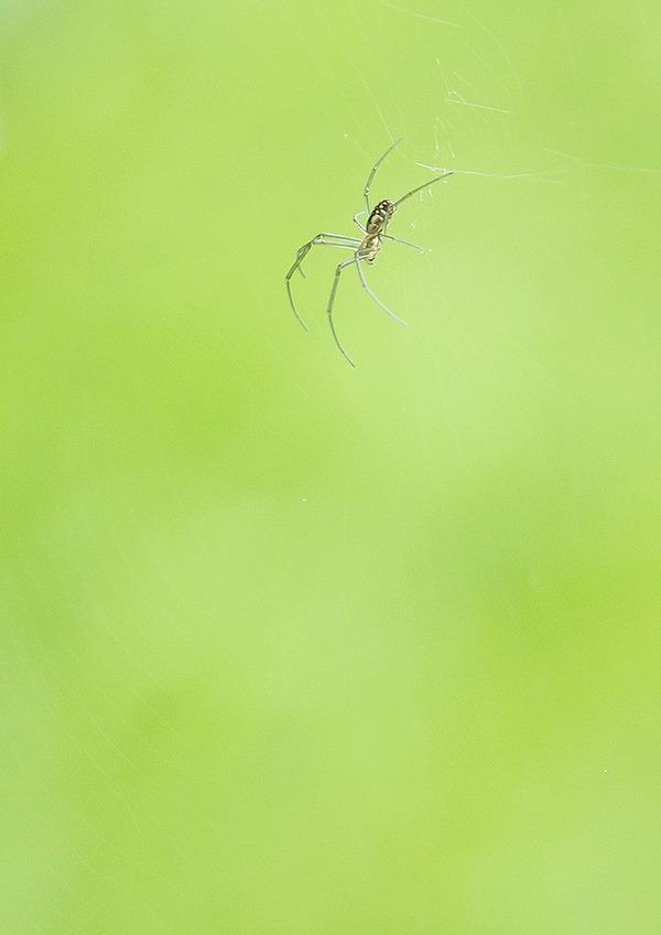 クモ (3)