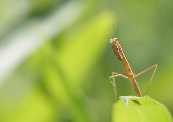 虫 (6)