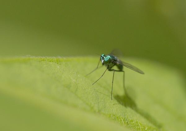 虫 (1)