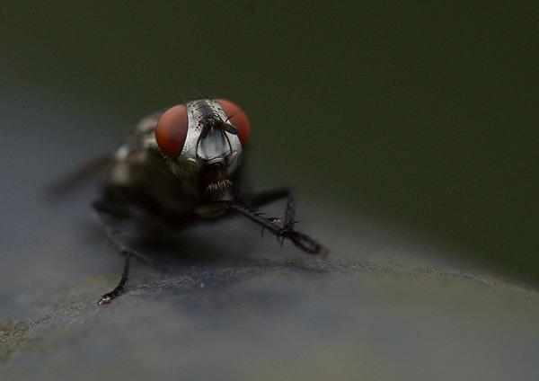 昆虫 (5)