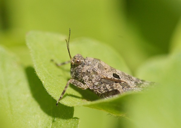 虫 (9)