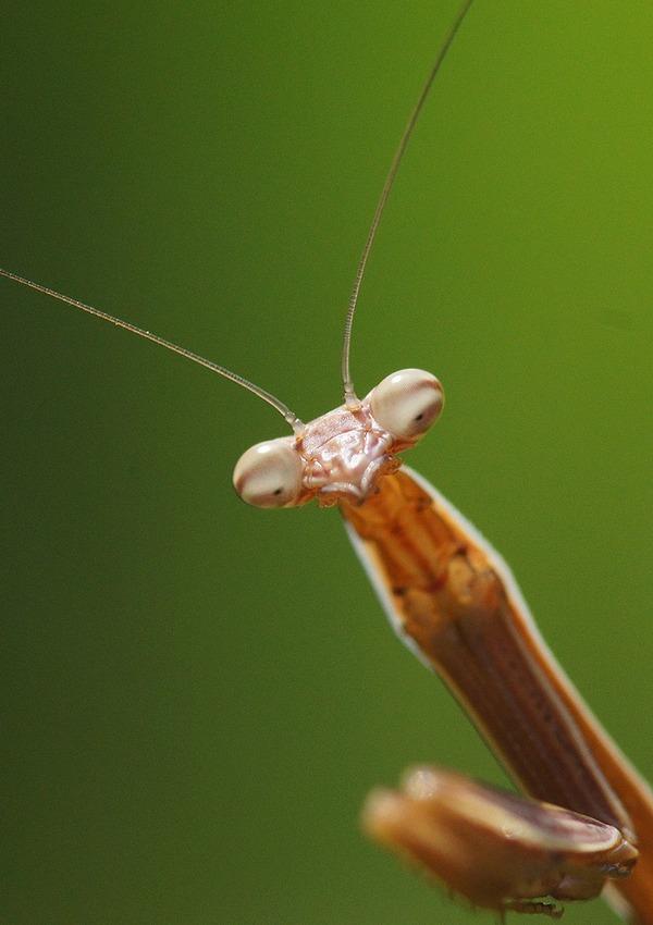 虫 (7)