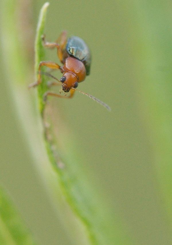 虫 (12)