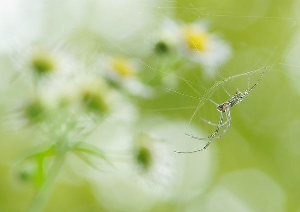 クモ (2)