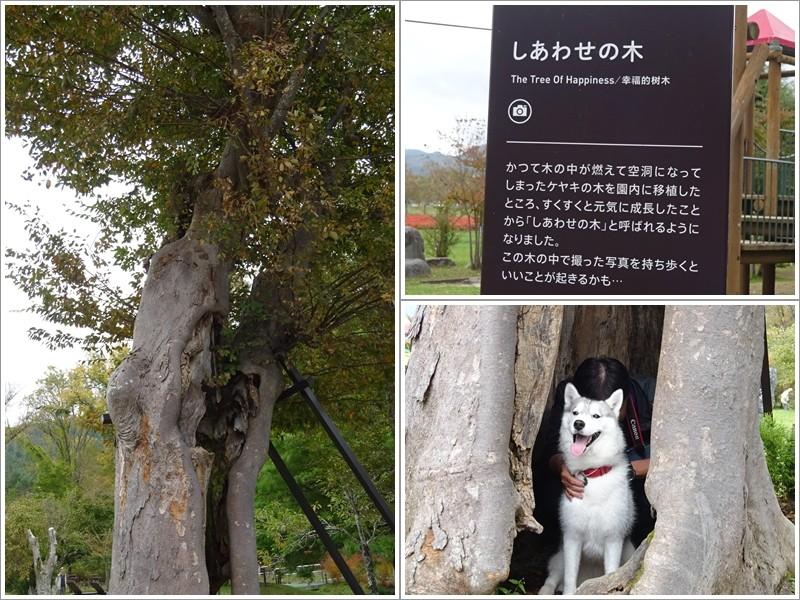 しあわせの木