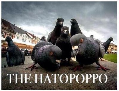 thehatopoppo