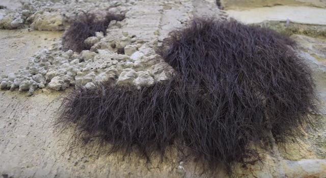 壁から髪の毛のようなものが大量に・・・ ある虫の大群だった! メキシコ