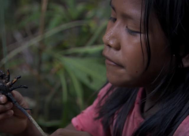 """世界最大のクモ""""ゴライアスバードイーター""""はベネズエラの子供達にとってご馳走"""