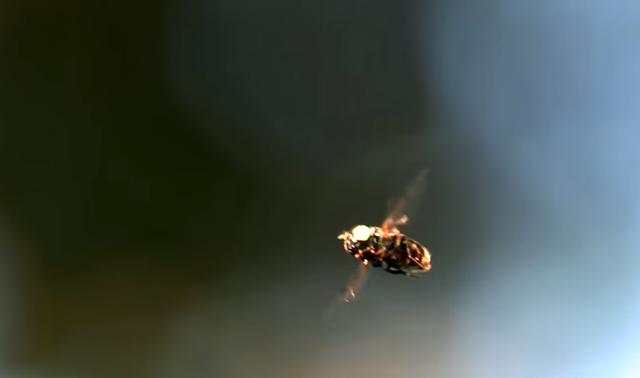 なぜ、ハエを叩くのが難しいのか 「まばたきよりも速い」米研究結果