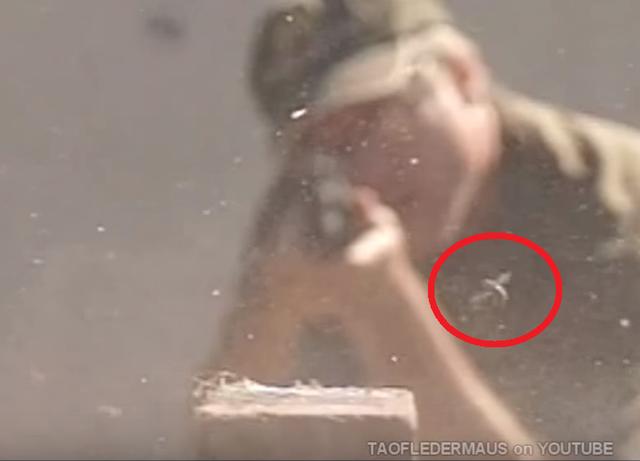 ハエの反射神経を銃で撃って確かめてみた