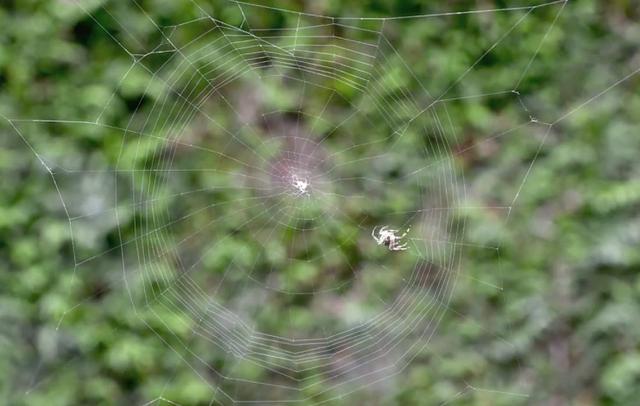 蜘蛛の巣が完成されるまでの早送り動画