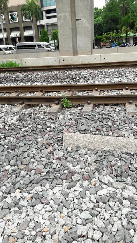 滅多に電車は来ない線路