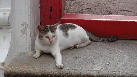 ワットポーの出口で寛ぐ野良猫