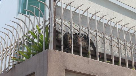 フェンスに挟まって寝ている野良猫