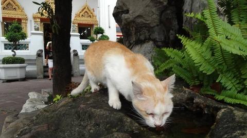 水飲む野良猫