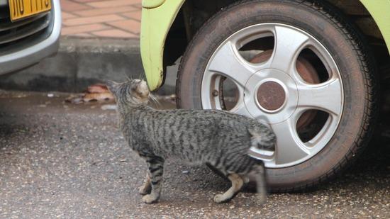 ラオス・ビエンチャンの野良猫