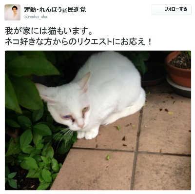 蓮舫・れんほう@民進党さんのツイート 我が家には猫もいます。
